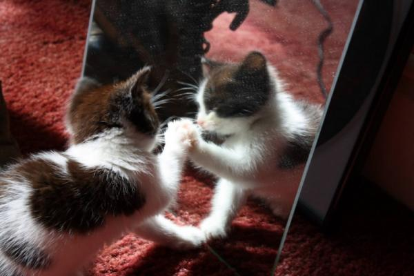 Funny cat and his reflection