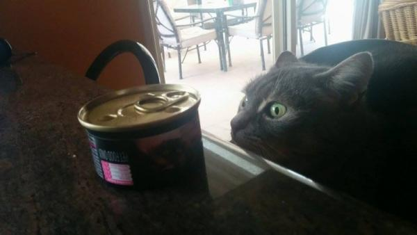 Funny cat looking at the food