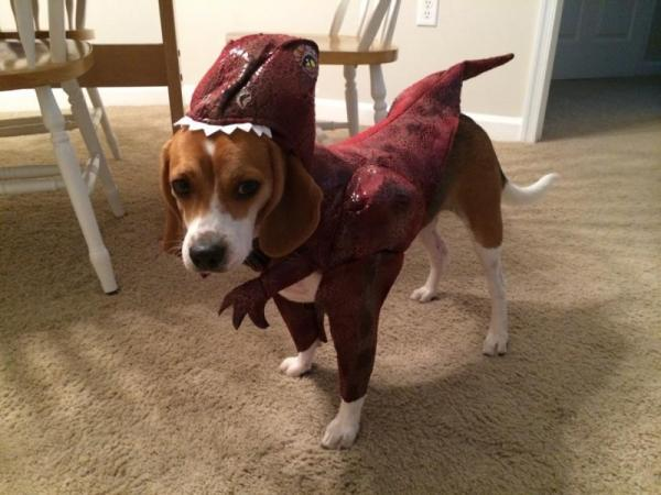 Funny costume for dog