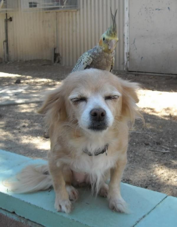 Funny dog with bird sitting on its back