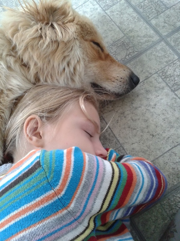 Sleeping cute dog and girl