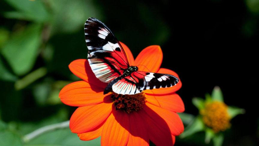 desktop-hd-butterfly-wallpapers-free-download